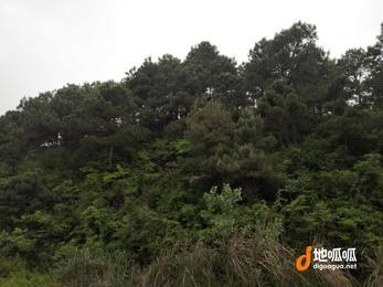 江西 赣州 兴国县 60000亩 转让