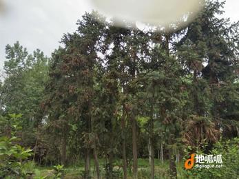 江西 赣州 兴国县 200000亩 期限25年转包