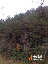 江西 赣州 于都县 100000亩 期限25年转包