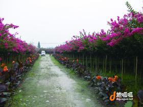 广东 佛山 高明区 105亩园林花木场 转让