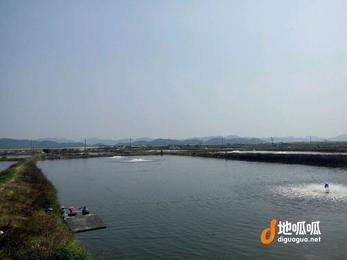 广东 江门 台山市 130亩鱼塘养鸭场 转让